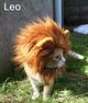 Leo cat